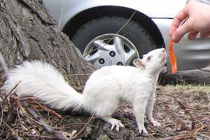 Binny, late Action Squad member - and albino squirrel